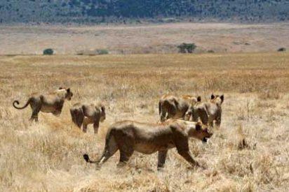 Lugares maravillosos: Ngorongoro, Tanzania