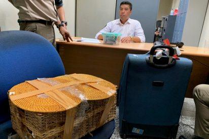 Un ruso intenta llevar a un orangután de contrabando en su equipaje de mano