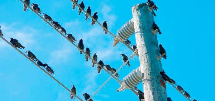 ¿Por qué los pájaros no se electrocutan cuando se posan sobre los cables de tendido eléctrico?