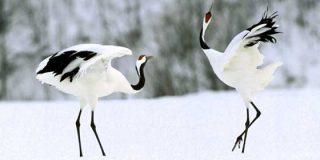 Excursiones en Hokkaido: Parque Nacional Akan