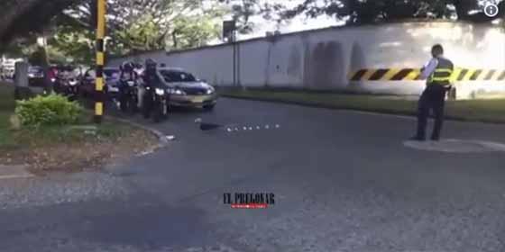Sin ver el semaforo: Esta familia de patos detuvo el tráfico para cruzar la calle