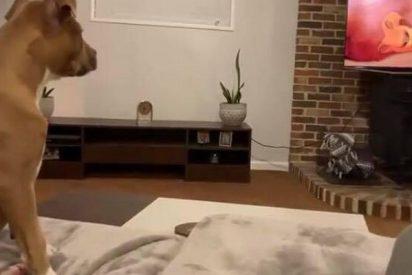 No te pierdas la emotiva reacción de esta perra al ver el momento más duro de 'El Rey León'