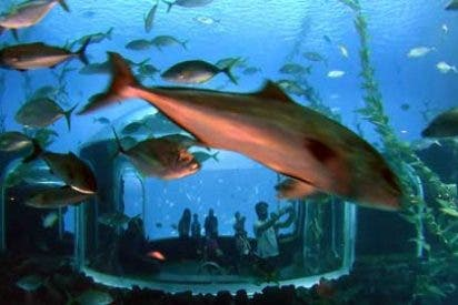 """""""Poema del Mar"""", el Acuario más espectacular del mundo"""