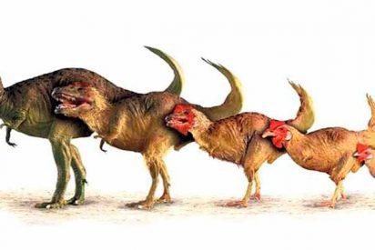Planeta Tierra: Registros antiguos alteran la línea de tiempo de diversificación animal