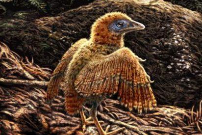 ¿Sabías que las aves de los tiempos de los dinosaurios salían del huevo a la carrera?