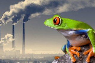 """Así es el """"efecto de la rana hervida"""" que nos hace perder el interés por el cambio climático"""