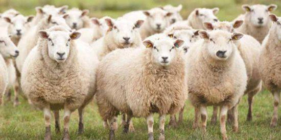 """""""Me amenazaban con cortarme las piernas"""": así acojonaban al pastor-eclavo y su pareja en la granja"""