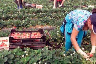 Empresarios de la fresa estudian acciones legales contra Telecinco por