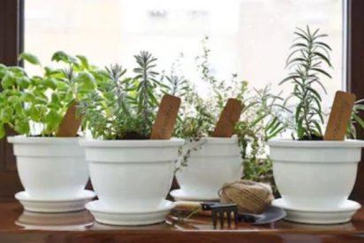 5 PLANTAS que NO necesitan mimos (aunque siempre les puedes cantar)