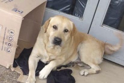 La triste historia de Toto, el perro que espera en la puerta del hospital a su dueño fallecido