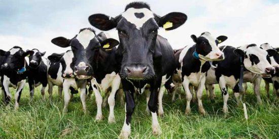 Sustituir la leche animal y derivados por leches vegetales