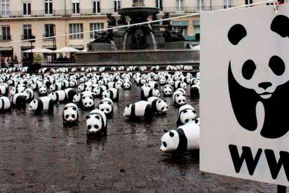 Acusan a LA ONG conservacionista WWF de financiar grupos paramilitares que han torturado y matado a personas