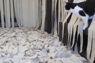 El vídeo de este gato volviéndose loco en una habitación llena de papel higiénico se hace viral