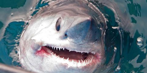 Un tiburón blanco arrebata la pesca lograda por una familia