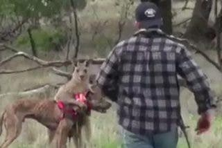Un hombre le parte la cara a un canguro para salvar a su perro