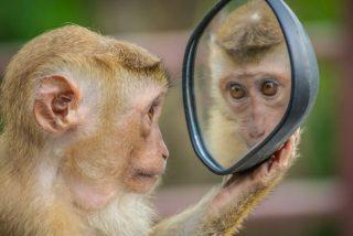7 curiosidades que seguro ignorabas sobre los espejos