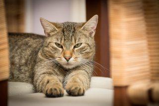 Este gato feroz se enfrenta a la jauría de perros rabiosos y sale victorioso