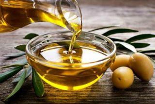 Andalucía prevé una producción de 983.600 toneladas de aceite de oliva
