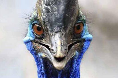 El ejemplar de casuario (ave más peligrosa del mundo) que mató a su dueño será subastada
