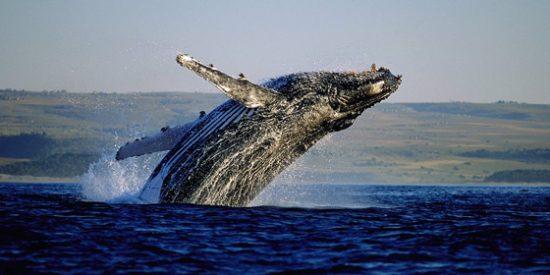 """Sudáfrica: Un viaje por la """"Ruta de las ballenas del Cabo"""""""