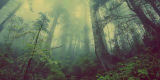Calentamiento: El cambio climático amenaza con diezmar los bosques nubosos americanos