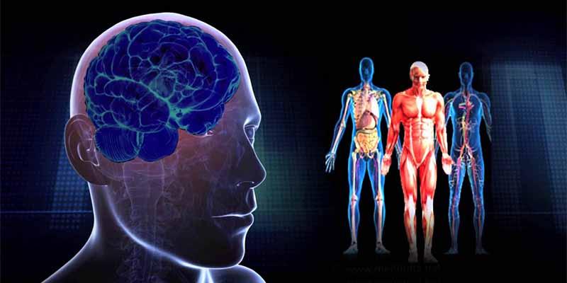 Científicos relacionan una actividad cerebral excesiva con una vida más corta