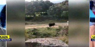 """El portavoz de la Fundación Toro de Lidia embiste con la realidad a la cateta del PACMA: """"Si Marius llega a ser un toro de lidia, acabas volando"""""""