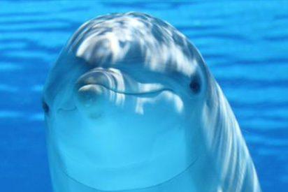 ¿Sabías que los delfines tienen clítoris y sirve para lo mismo que el humano?