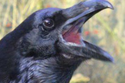 """Salvador Monzó Romero:""""Los cuervos"""""""