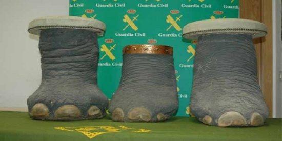 La Guardia Civil logra que un tipo no venda por internet una pata de elefante como si fuera un taburete