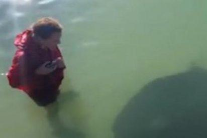 Se mete en el mar y se lleva el susto de su vida al toparse con espeluznante criatura marina