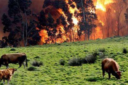 ¡Arde España!: Más de 10.000 hectáreas quemadas en 7 incendios simultáneos