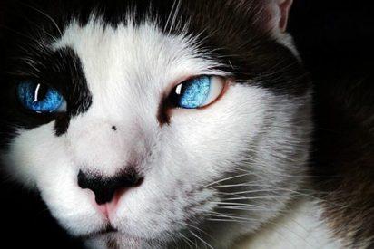 """El gato que """"siempre llama dos veces"""" a la puerta, y se hace viral"""