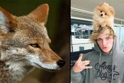Devoran al perro del youtuber Logan Paul