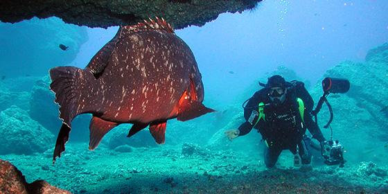Madeira: Paraíso del buceo