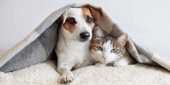 ¿Puedo viajar con mi perro o gato a República Dominicana?