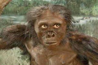 El Origen del Hombre: Fósiles atribuidos a un humano ancestral corresponden a un nuevo simio