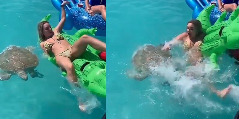 Esta modelo se relajaba en una piscina, pero una tortuga apareció y terminó haciéndole pasar un mal rato