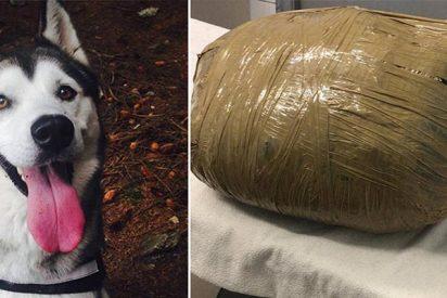 Deja a su perra en una guardería canina y se la devuelven muerta en un paquete