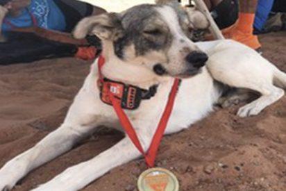 Este perro corre una carrera de 250 kilómetros en el Sahara y se gana la simpatía de la Red