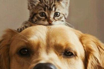 Así funciona el primer banco de sangre para perros y gatos