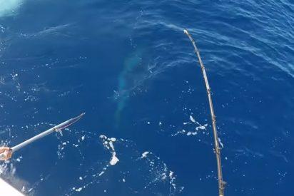El momento exacto de la captura de un monstruoso pez espada de 343 kilos