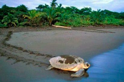 Qué ver en Costa Rica: Playa Tortuguero
