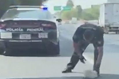 Este policía salva a un perrito en una carretera