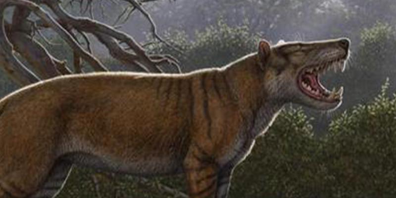 Así es Simbakubwa kutokaafrika, el nuevo carnívoro gigante escondido en el cajón de un museo