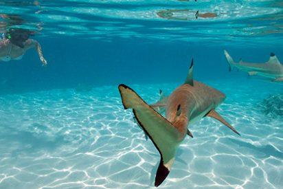 Buceando con tiburones en Tahití