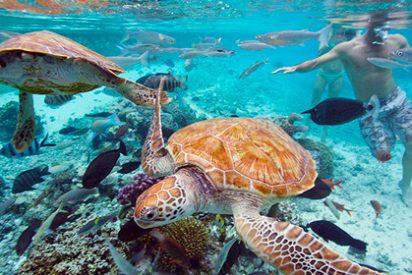 Dónde bucear en las Islas de Tahití