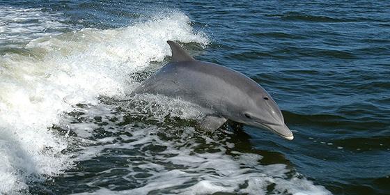 El problema del cambio climático amenaza a los delfines
