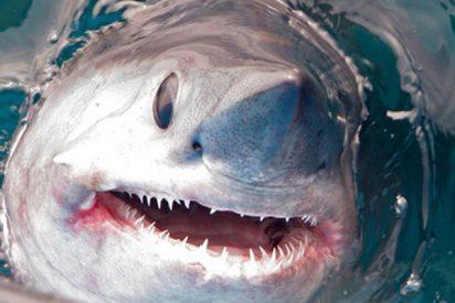 El momento exacto en que capturan a un enorme tiburón de 250 kilógramos y más de dos metros de longitud