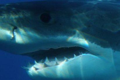 Este enorme y feroz tiburón blanco horroriza a dos pescadores al atacar su bolsa con carnada